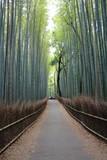 京都嵯峨野の竹林 - 176466515