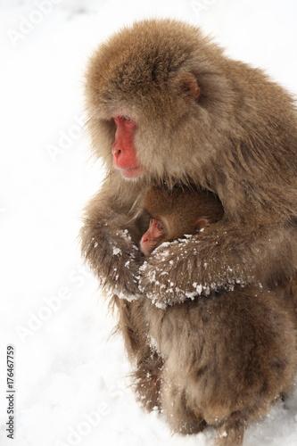 Fotobehang Aap ニホンザルの親子(snow monkey)