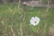 Wildflowers on a meadow