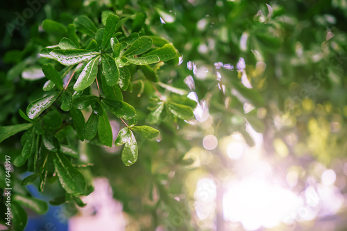 Green leaves with drops of water after rain with green bokeh background and sunlight Poster