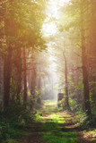 Autumn Morning Forest with sunshine, Hungary - 176487312