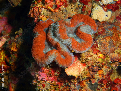 Stone coral Poster