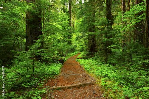 Papiers peints Route dans la forêt a picture of an Pacific Northwest forest trail
