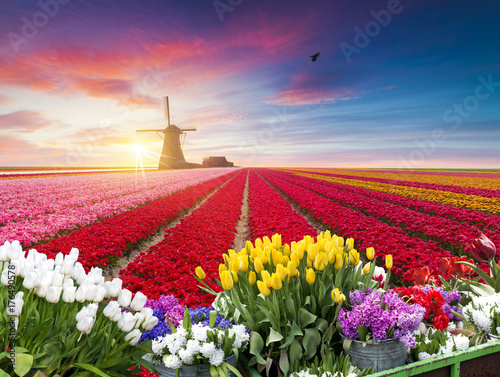 tradycyjne-holenderskie-holenderskie-holenderskie-dekoracje-z-jednym-typowym-wiatrakiem-i-tulipanami-krajobrazy-holandii