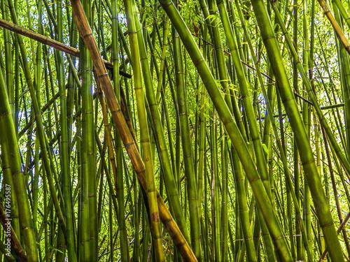Fotobehang Bamboe Forest