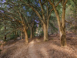Cork tree Grove - 176496771