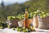 Freshly brewed homemade beer fresh green hops background brewing concept - 176498754
