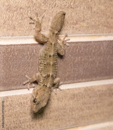 Fotobehang Kameleon Salamandra