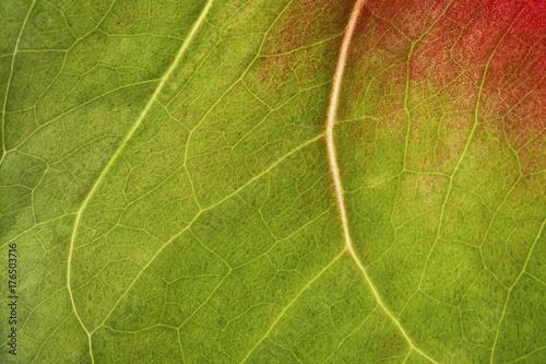fondo textura de flor