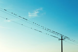 Birds on high voltage cables at sunset - 176506953