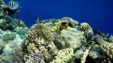 Reef and beautiful fish. Underwater life in the ocean. Tropical fish.  - 176514967