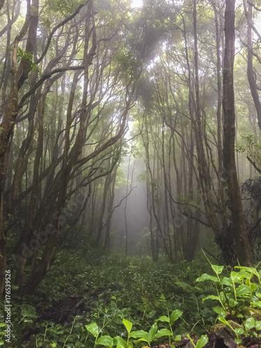 Aluminium Betoverde Bos Poço da Ribeira do Ferreiro - Açores
