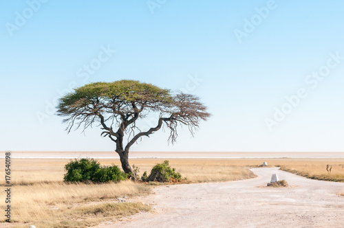 Spoed canvasdoek 2cm dik Lichtblauw Tree with Etosha Pan in northern Namibia in the back