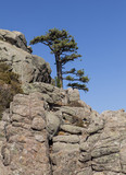 lonely tree and rock formation - 176554986