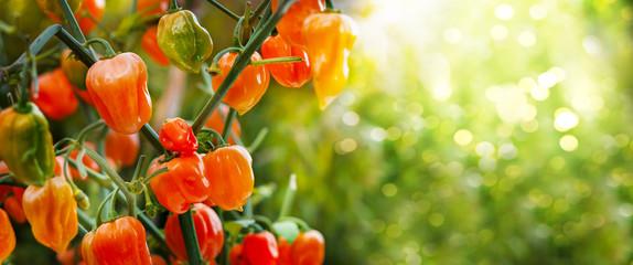 Orange Pepperoni vor grünem Bokeh