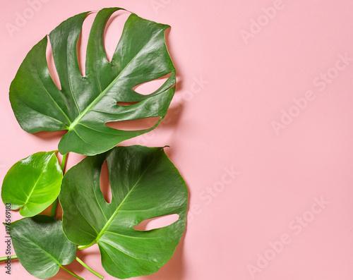 Tropikalne liście roślin monstera