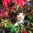 gattino e autunno