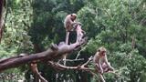 Monkeys sitting on the tree - 176575148