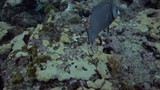 Tropical fish swimming around the USS Spiegel Grove wreck, in the Florida Keys.  - 176578173
