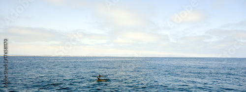Fototapeta Dolphins swimming in front of Ventura coast line, Southern California