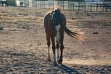 wild horses - 176584900