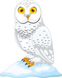 Vector illustration of cartoon Arctic owl isolated on white background