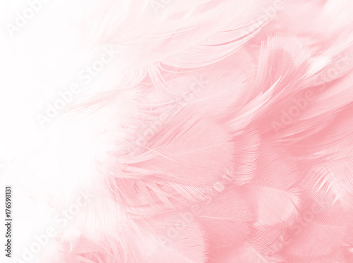 Coral Pink vintage color trends feather texture background  - 176598131