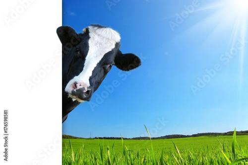 Mucca che guarda e panorama con prateria e raggi di sole