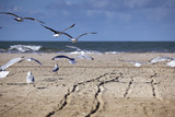 Seagulls at Empty Beach in Normandy in Autumn - 176601950