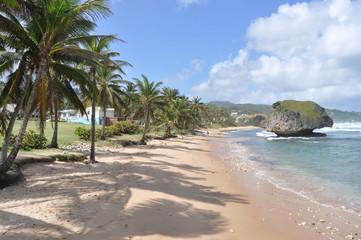 Coastline in Barbados