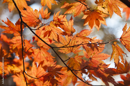 Foto op Plexiglas Baksteen Fall in the wood