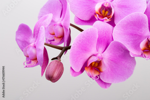 Pink orchid isolated on the white background.