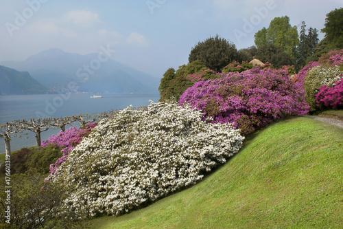 Fotobehang Azalea Lake Como; Bellagio, villa Melzi gardens, azalea bushes