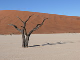 Dunes and dead tree in the Namib Desert in Namibia in Africa - 176621186