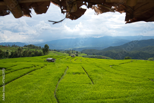 Aluminium Rijstvelden Beautiful green rice fields on terraces in Thailand at Ban Pa Pong Pieng in Mae chaem, Chaing Mai.
