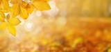 Autumn leaves on the sun - 176631391