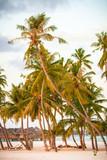 Palms on the Beach, Maldives - 176636944