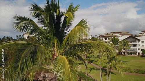 the top of the palm tree on the background of beautiful stunning resort montage kapalua on sunny day on island maui,hawaii