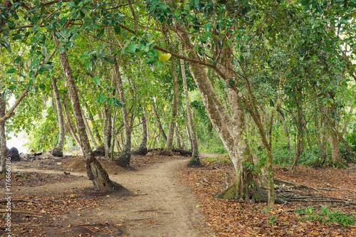 Papiers peints Route dans la forêt Small road in tropical forest near beach