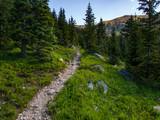 Rocky Trail Through Pine Forest - 176669523