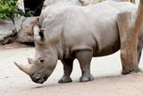 Rhino - 176671933