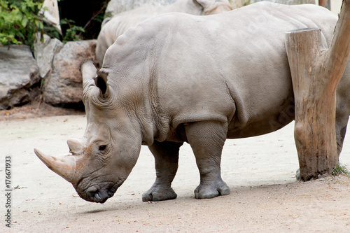 Aluminium Neushoorn Rhino