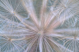 Symetria dmuchawca