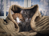 Two cats hide under the blanket. Outside, the winter snow. The concept of home comfort, security, warmth - 176688948