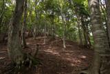 木漏れ日が差し込む若いブナの森 - 176694120