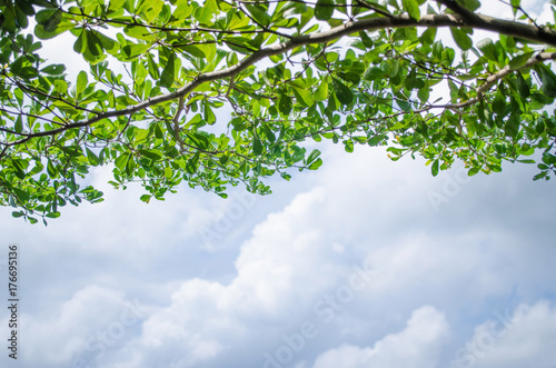 Branch tree Green Leaf and Clouds Blue Sky Background Poster