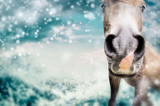 Close up of Funny horse face  at winter nature background with snow - 176696709
