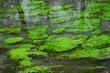 清流と水草