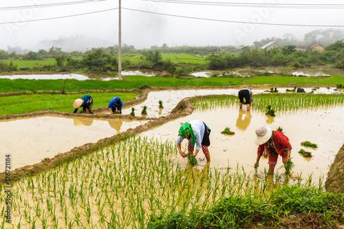 Papiers peints Les champs de riz Rice terraces in Ha Giang, Vietnam
