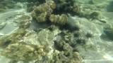 Snorkeling in Lepe island Thailand - 176727578